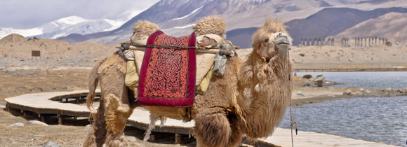 Camel Karakorum highway-1