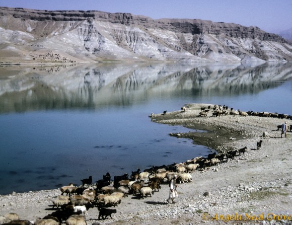 Sheep at the Kabul Gorge