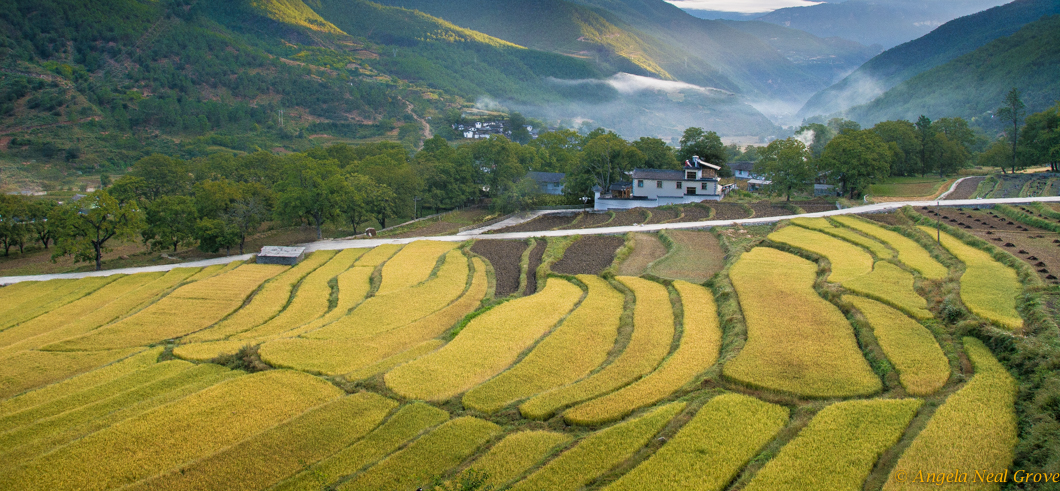 Room with a view, terraces of golden wheat, Tacheng, China