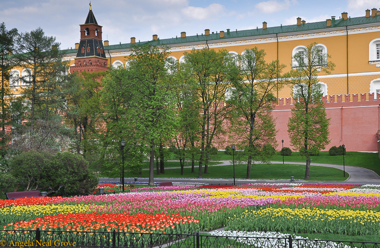 Sensational Tulip: Tulips planted in patterns outside the Kremlin, Moscow. Photo: A.N. Grove