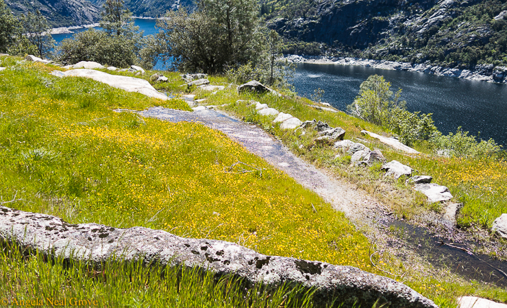 Granite rocks and goldfield flowers beside the water of the Hetch Tetchy reservoir, Yosemite National Park. |Image by Angela Neal Grove