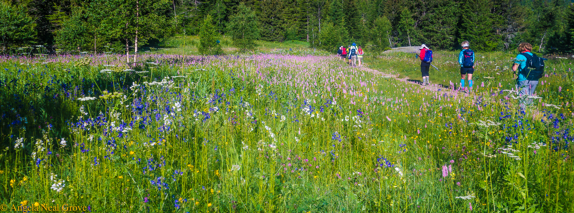 Mont Blanc Challenge: Hiking in France the early morning through fields of wild flowers //Photo: ANGrove