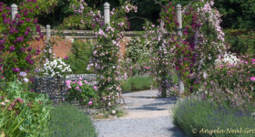 English Garden Style; The Rose garden at Mottisfont Abbey, England has over 500 varieties of old fashioned roses