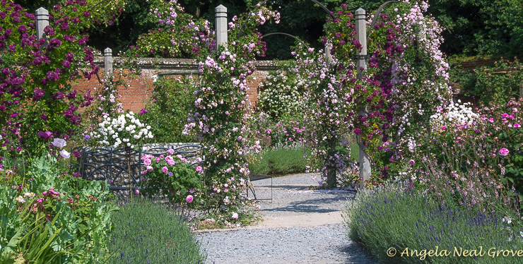 English Garden Style, Rose garden at Mottisfont Abbey, UK, is world famous