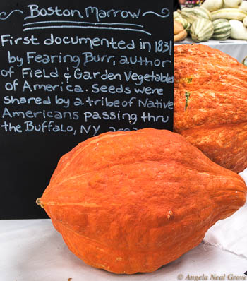 Heirloom seeds Expo has Global Message: Boston Marrows were one of the heirloom varieties on display. They were first documented in 1831 from seeds shared by a tribe of Native Americans in Buffalo, New York