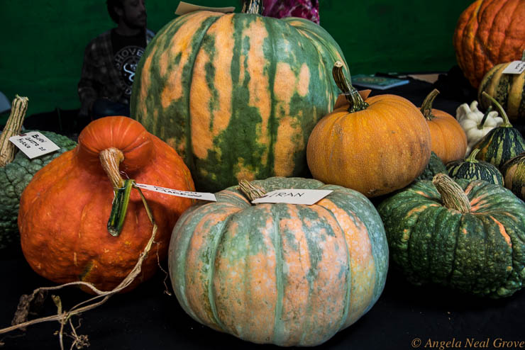 Heirloom seeds Expo has Global Message: Heirloom squash and melons from around the globe glow glorious colors - a celebration of genetic diversity