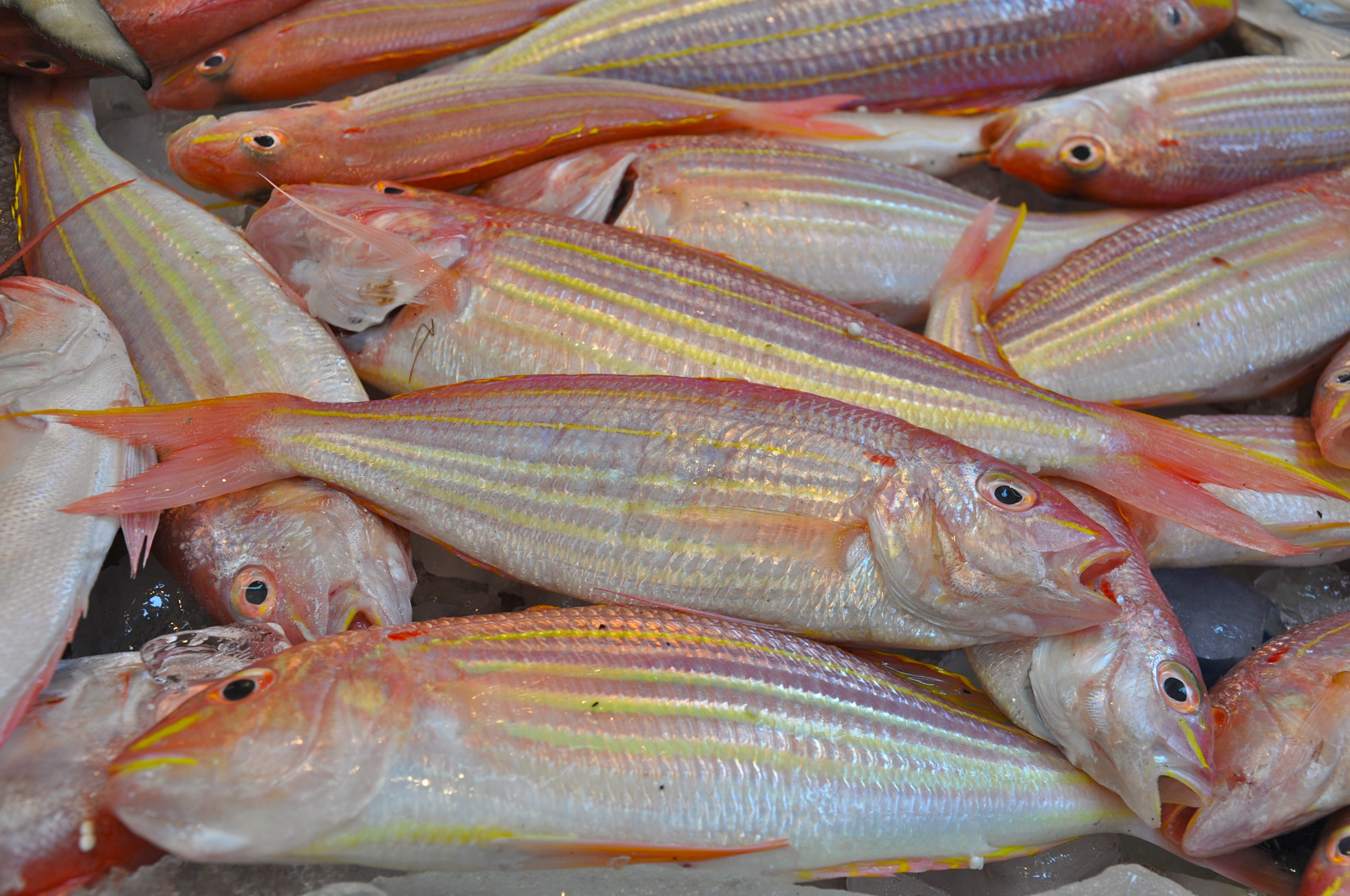 Hong kong notebook angela neal grove for Fresh fish market miami