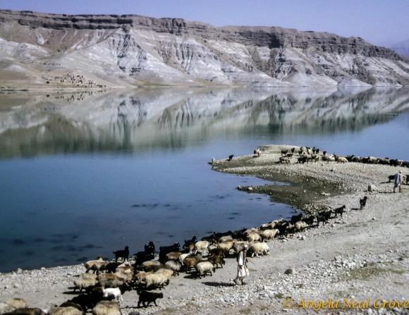Sheep at the Kabul Gorge
