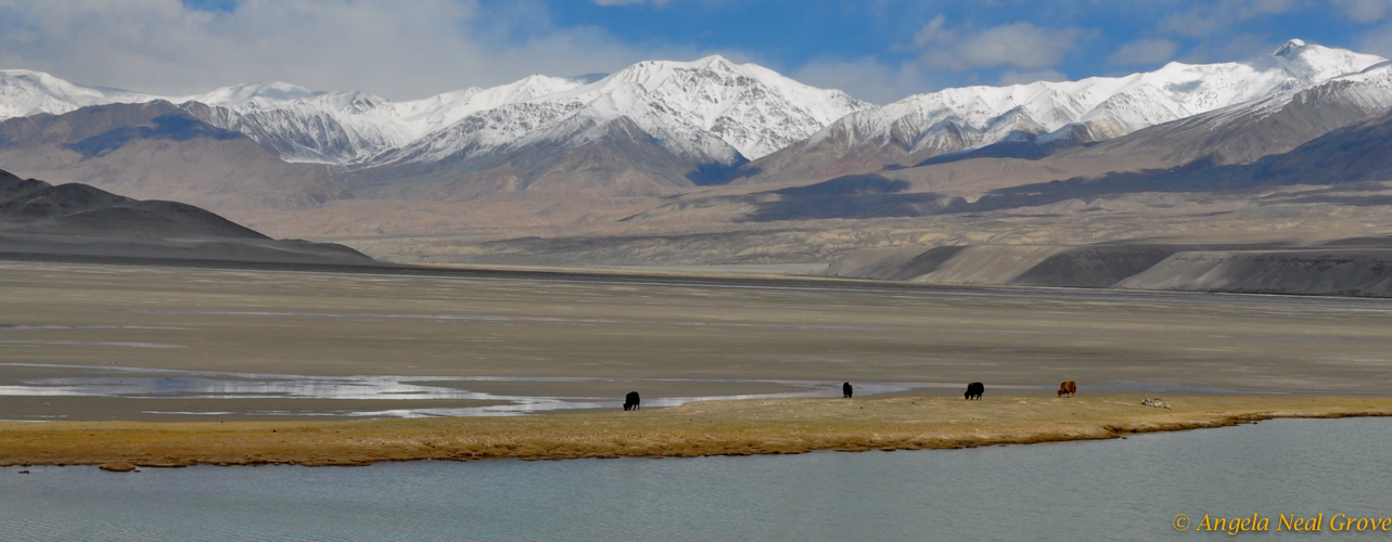 Silk road trail with and yaks