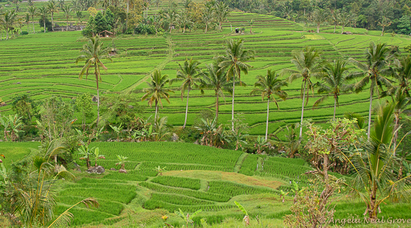 Bali Rice Terraces | Photo: Angela Neal Grove