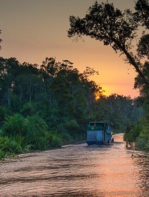 Klotok chugging down the river after visiting endangered orangutans