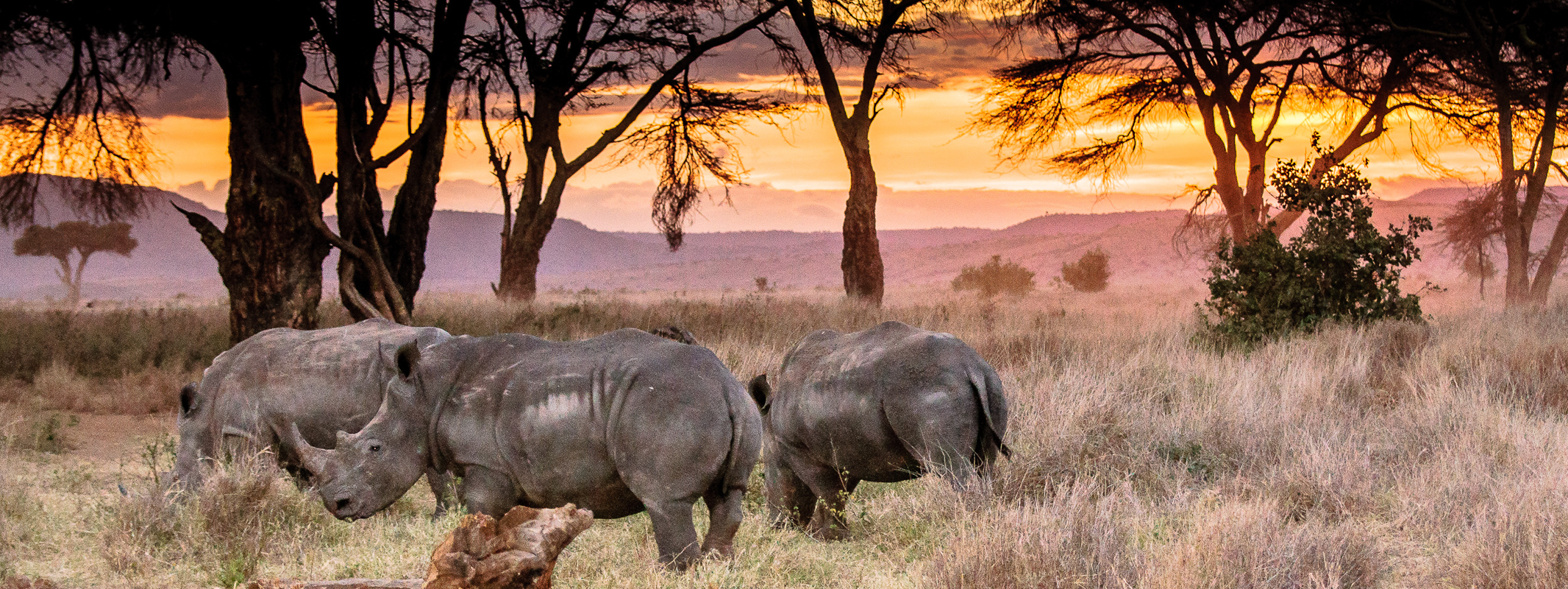 Endangered Rhinos | Lewa Wilderness, Kenya | Photo: Angela Neal Grove