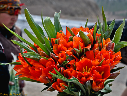 Wild mountain tulips for sale in the Ferghana Valley, Uzbekistan. This is the original habitat for tulips. Botanists theorize the bulbs traveled west along the Ancient Silk Road