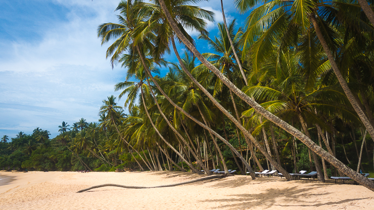 Sri Lanka: Paradise Discovered showing the beach at Tangalle on the south coast of Sri Lanka. Golden sand and coconut palms.//Image: A.N.Grove