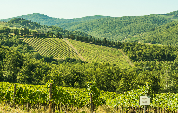 Florence Highlights and Tuscan Tales: Vineyards of Tuscany make a patchwork pattern across the landscape. Some vineyards are named for family members