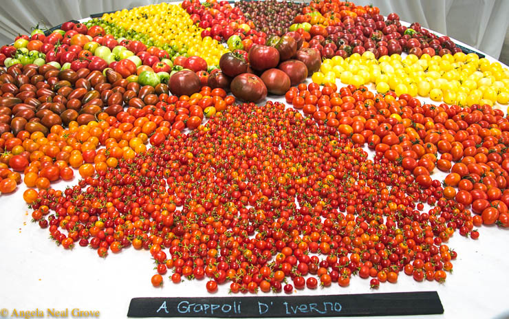 Heirloom seeds Expo has Global Message: Multiple varieties of glowing heirloom tomatoes were arranged on table tops