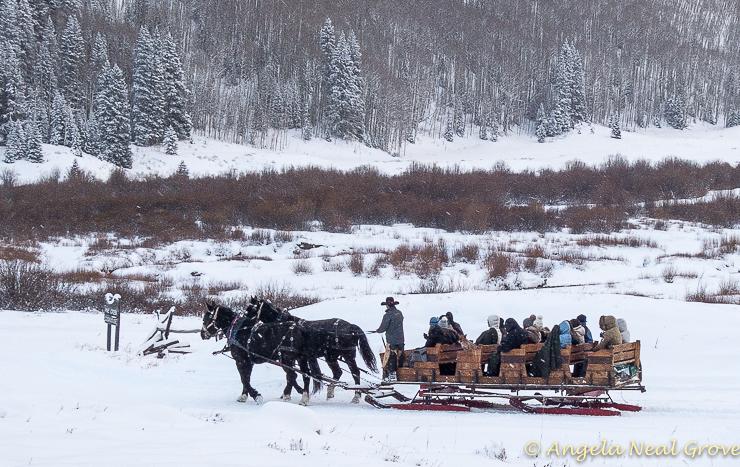 Aspen Horse drawn sleigh