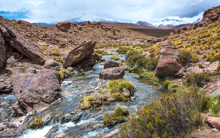 The Otherworldly Atacama Desert.The hike along the gurgling Rio Blanco river was one of the most beautiful hikes I have ever taken. With each turn there was a vista more beautiful than the last. The backdrop was of distant snow clad volcanoes. Viscacha, long tailed rabbits, vicuna and lizards were my companions. PHOTO; ANGROVE